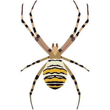 Vector spider argiope bruennichi illustration isolated on white