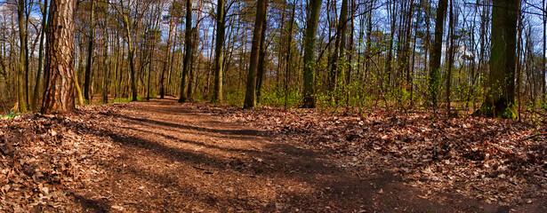 droga przez wionenny las