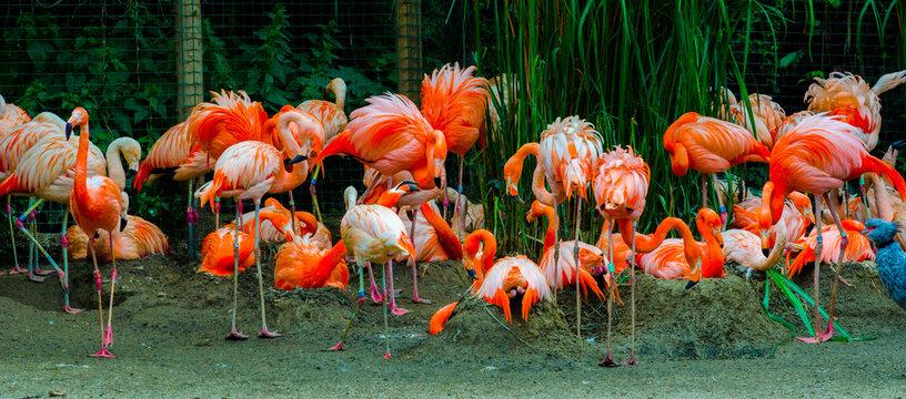 Flamingos in Prague zoo, Czech Republic