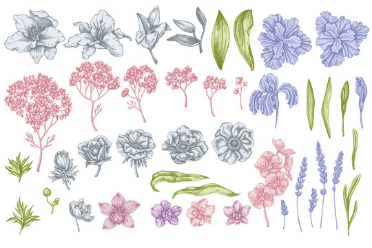 Vector set of hand drawn pastel anemone, lavender, rosemary everlasting, phalaenopsis, lily, iris