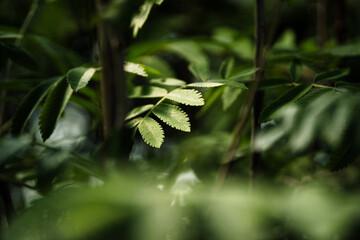 Spa green eko