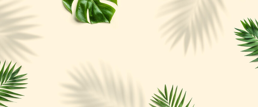 Tropical palm leaves, Monstera leaf and shadows plant on light background. Minimal Summer concept, flat lay, top view