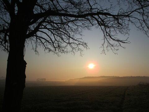 Sonnenaufgang hinter einem Baum am frühen Morgen