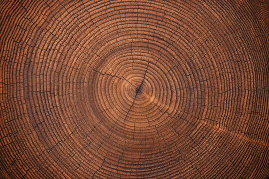 wood texture of old stump. natural background of cut trunk with annual rings