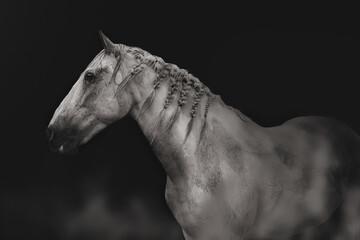 Fototapeta cheval pie gris