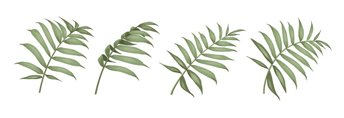 Set of differents palm leaves on white background.