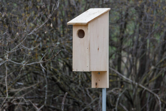Handmade Wood Duck (Aix sponsa) nesting box set up in woodlands near water. Selective focus, background blur and foreground blur