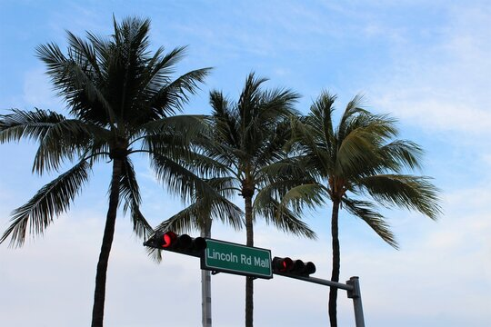 Lincoln Road Mall street sign located in Miami Beach with palm trees in the background.