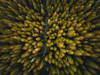 Fototapeta Aerial top view of summer green trees in forest in Slovakia. Drone photography