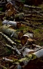 Fototapeta sawn birch logs obraz