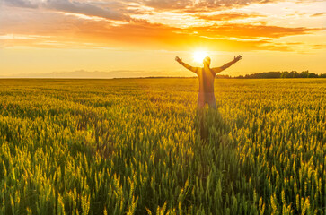 Fototapeta A man stnding and watching sunset in a wheaten shiny field with golden wheat and sun rays, deep blue cloudy sky and rows leading far away, valley landscape
