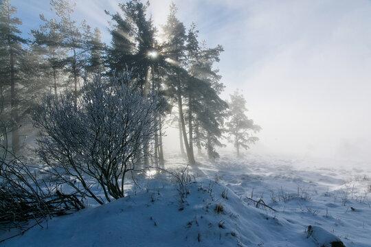 Winterlicher Bergwald in den Hochvogesen