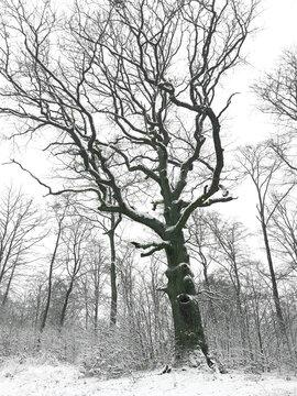 Winter am Rennsteig im Thüringer Wald