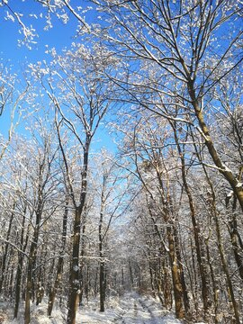 Winterzeit am Clausberg auf dem Rennsteig, Thüringer Wald