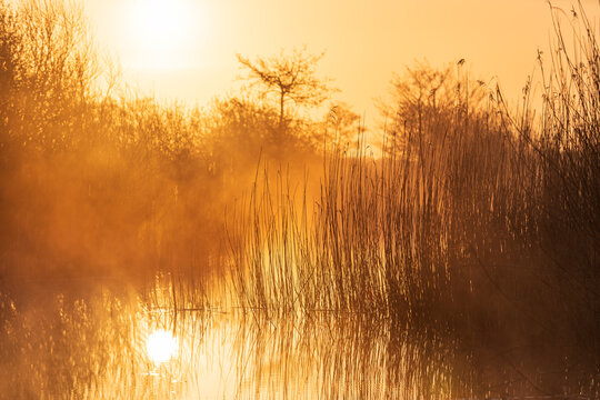 Tranquil, foggy sunrise in a wetland in the Netherlands.