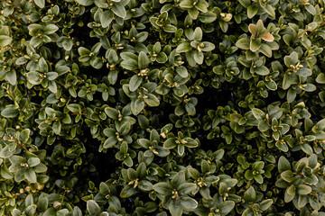 Fototapeta zielone rośliny w ciepły wiosenny dzień, zieleń w parku z bliska