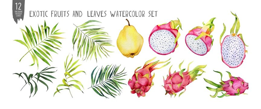 Fresh quince, leaves and dragonfruts watercolor set, halves, slices, bites. Handdrawn tropical fruits. Isolation on white watercolor set.
