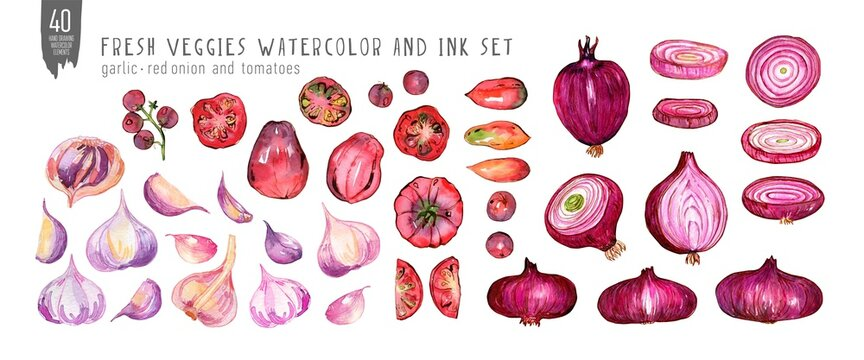 Watercolor and ink garlic, red onion and tomatoes set isolated on white. Colorfull set of red veggies for design a textile, fabric, wallpapers, print and banners.