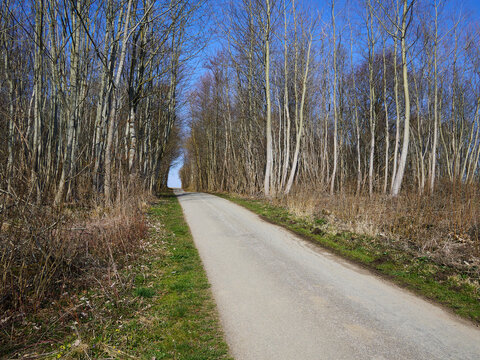 Small country road with trees on the sides