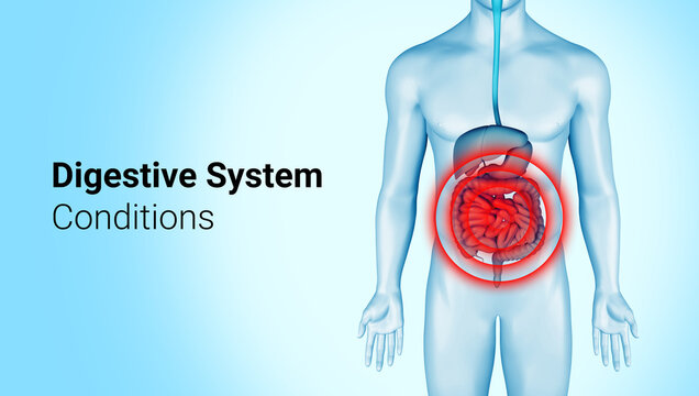 Digestive system pain on 3d illustration of male body. Intestines pain on anatomical digestive system infographic. Belly hurts illness. 3d rendering.