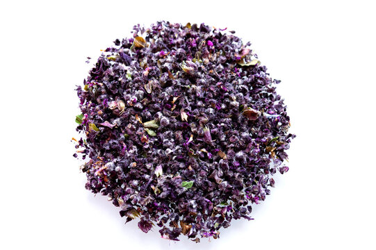 Dried inflorescences of purple basil on a white background