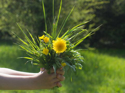 child hand offering a bunch of local flowers for planet