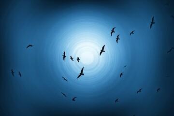 Fototapeta Seasonal Birds in Qatif
