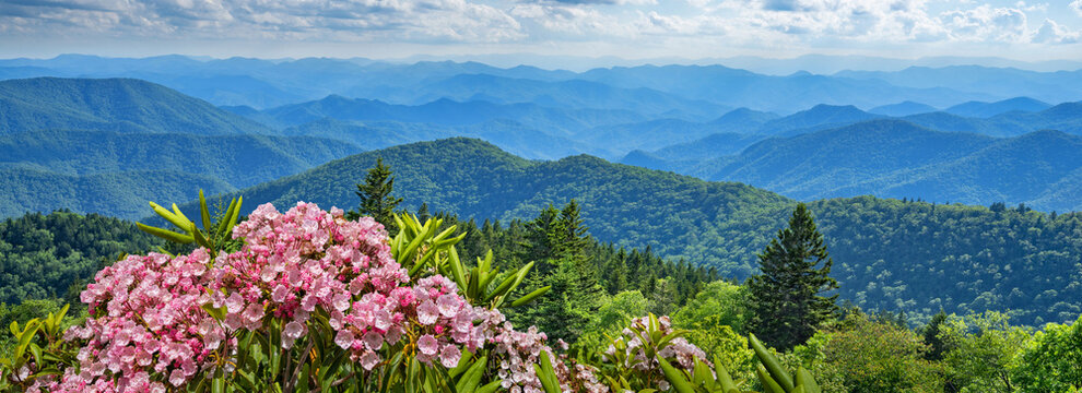A panoramic view of the Smoky Mountains from the Blue Ridge Parkway in North Carolina. Flowers blooming, layers of green hills and mountains. Near Asheville. North Carolina,USA.