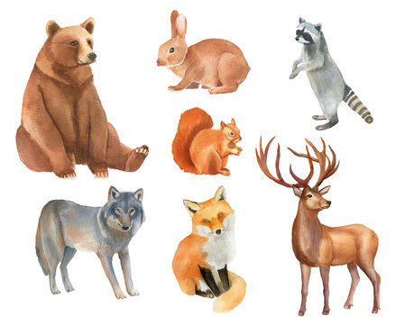 Clipboard set of watercolor hand drawn group of animal cliparts - bear, hare, raccoon, wolf, squirrel, fox, deer