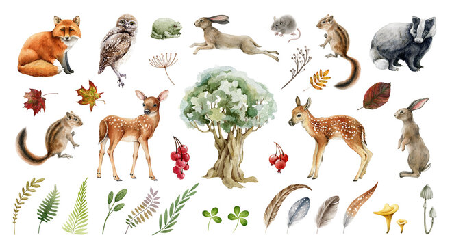 Forest wild animal big set. Watercolor illustration. Fox badger rabbit deer and chipmunk. Bunny, owl bird, toad, feather, leaf. Natural element collection. Realistic woodland set on white background