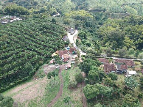 plantas de café Quindío Colombia