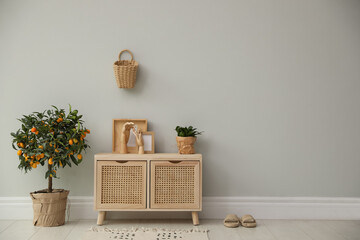 Fototapeta Stylish room interior with wooden cabinet and potted kumquat tree near grey wall. Space for text obraz