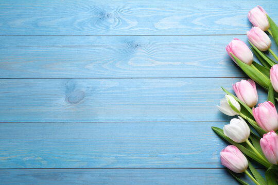 Beautiful pink spring tulips on light blue wooden background, flat lay. Space for text