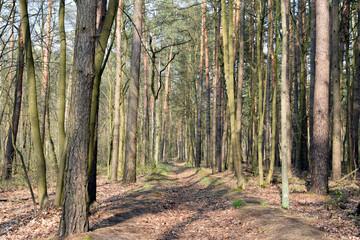Obraz Las. Drzewa. - fototapety do salonu