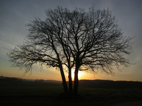 Sonnenaufgang hinter einem Baum - Hügel, Sonne, Silhouette, sunrise, dawn, Sonnenschein, Wanderung, Spaziergang