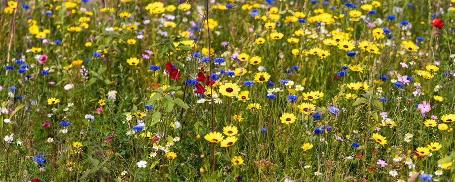 Colorful wildflower meadow in spring