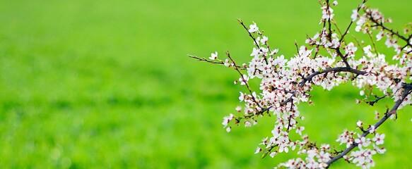 Obraz Kwiaty, drzewo, wiosna - fototapety do salonu