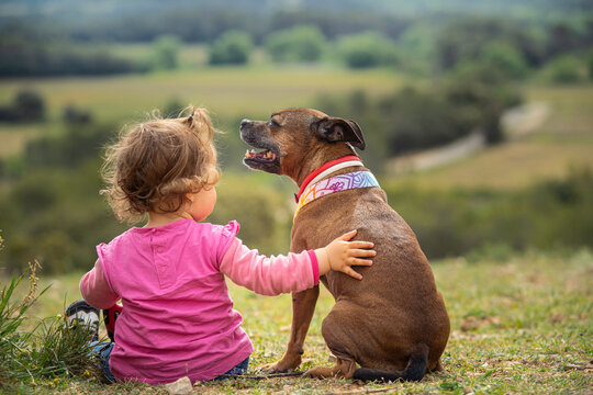 Little girl with a staffordshire bull terrier