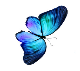 Fototapeta Color butterfly , isolated on the white