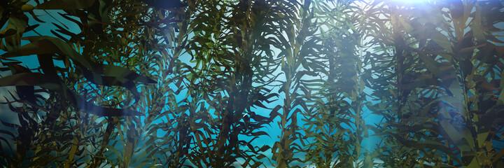 Obraz kelp forest, giant brown algae seaweed - fototapety do salonu