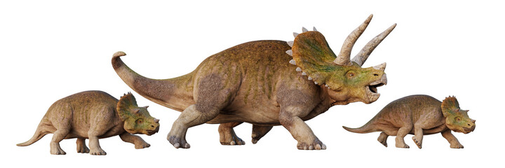 Fototapeta Triceratops horridus, dinosaur with babies, set of isolated on white background