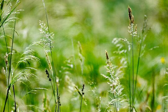 Wild Grass Background