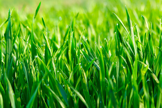 Eco Nature Background with Grass