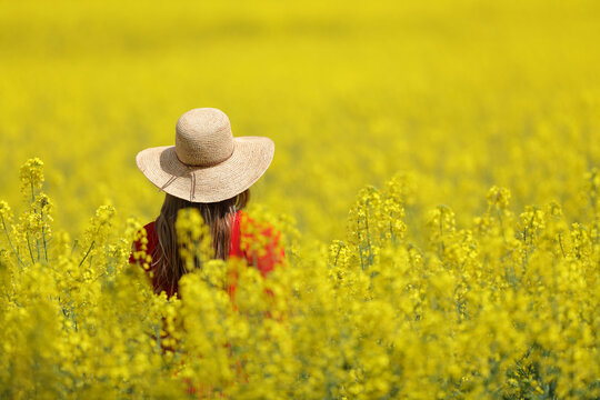 Back view of a woman with pamela walking in a yellow field