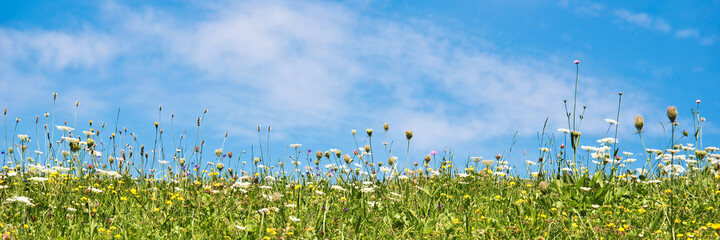 Wildflowers in a meadow and blue sky. Panoramic summer background