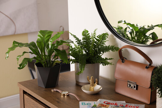 Beautiful potted ferns and accessories on wooden cabinet in hallway