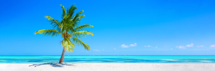 Fototapeta Banner of idyllic tropical beach with white sand, palm tree and turquoise blue ocean