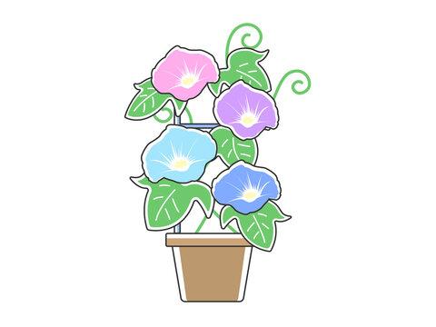 植木鉢で育てている朝顔のイラスト