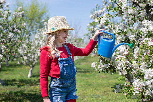 Little beautiful girl in the bay blossomed an orchard.  concept of gardening