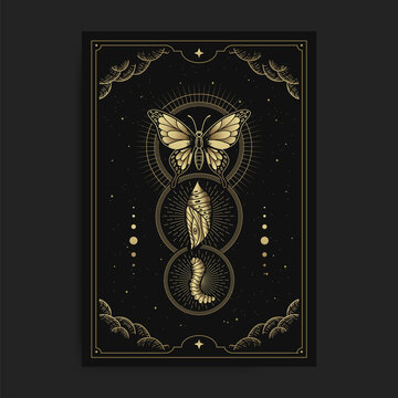 Metamorphosis of butterfly, cocoon, caterpillar with engraving, hand drawn, luxury, celestial, esoteric, boho style, fit for spiritualist, religious, paranormal, tarot reader, astrologer or tattoo
